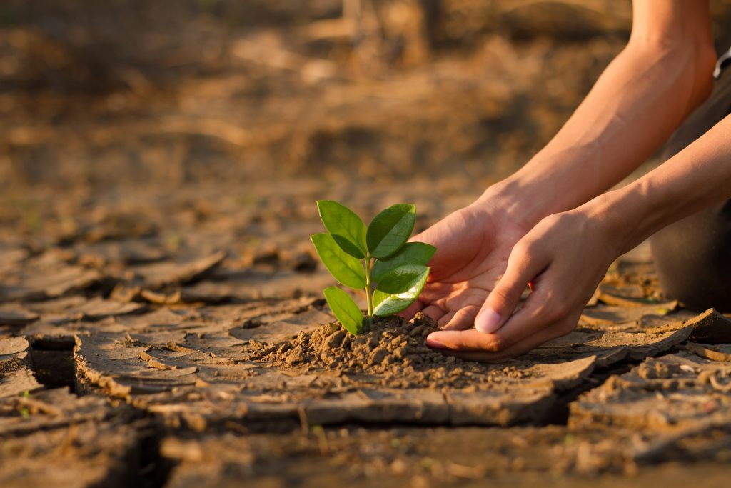 Hand of young children or teenager planting a tree on dry cracked land to recovery a nature to green again, Climate change crisis solution, Volunteer and Environment conservation concept.